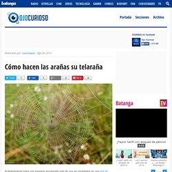 Cómo hacen las arañas su telaraña - Ojo Curioso