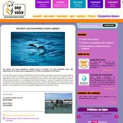 En Haiti les dauphins vivent libres