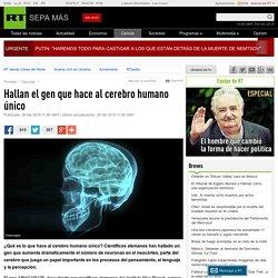 Hallan el gen que hace al cerebro humano único