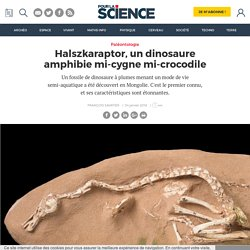 Halszkaraptor, un dinosaure amphibie mi-cygne mi-crocodile