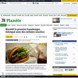 Bientôt le premier hamburger fabriqué avec des cellules souches