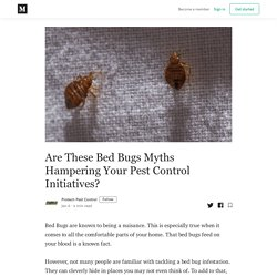 Are These Bed Bugs Myths Hampering Your Pest Control Initiatives?