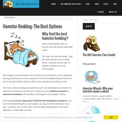 Hamster Bedding: The Best Options