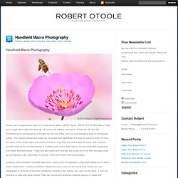 Handheld Macro Photography - Robert OToole Photography