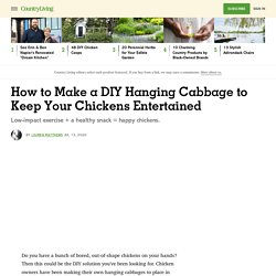 How to Make a DIY Hanging Cabbage for Chickens - How to Entertain Chickens in Winter