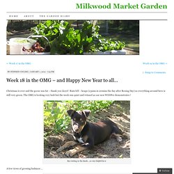 Week 18 in the OMG – and Happy New Year to all… | Milkwood Market Garden