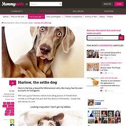 Harlow, the selfie dog - Yummypets