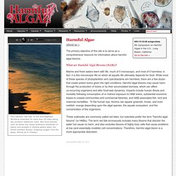 Harmful Algae : Red Tide