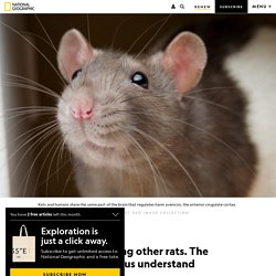 Rats avoid harming other rats. The finding may help us understand sociopaths.