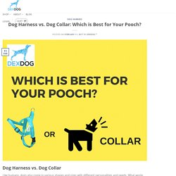 Dog Harness vs. Dog Collar: Which is Best for Your Pooch?