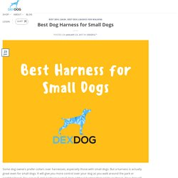 Best Dog Harness for Small Dogs