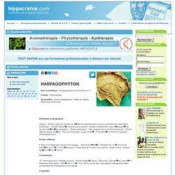 HARPAGOPHYTON , Harpagophytum procumbens D.C.
