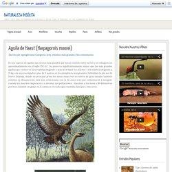 Aguila de Haast (Harpagornis moorei) ~ Naturaleza Insólita