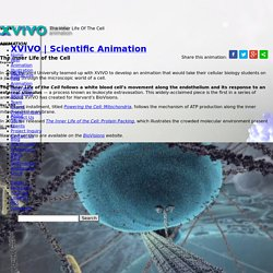 The Inner Life Of The Cell. The Human Cell Animation. XVIVO