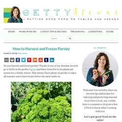 How to Harvest and Freeze Parsley For Best Flavor