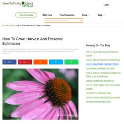 How To Grow, Harvest And Preserve Echinacea - Seed To Pantry School