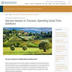 Harvest Season In Tuscany- Spending Good Time Outdoors