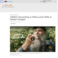 VIDEO: Harvesting A Wild Lunch With A Master Forager : The Salt