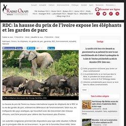 RDC: la hausse du prix de l'ivoire expose les éléphants et les gardes de parc