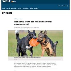 Haustiere: Wer zahlt, wenn der Hund einen Unfall mitverursacht? - WELT