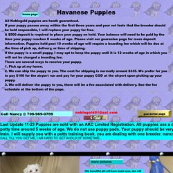 havanese puppies for sale puppy