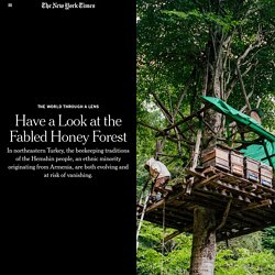 Have a Look at the Fabled Honey Forest