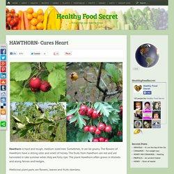 HAWTHORN- Cures Heart - Healthy Food Secret