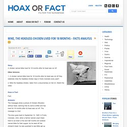 Mike, the Headless Chicken lived for 18 Months - Facts Analysis-HoaxOrFact.com Analysis.