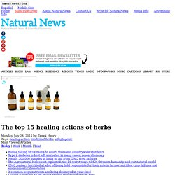 The top 15 healing actions of herbs - NaturalNews.com