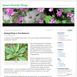 Healing Plants in Your Backyard