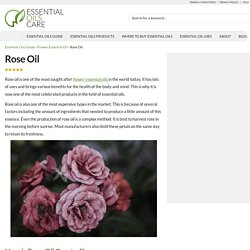 Rose Oil and Its Healing Benefits - Essential Oils Care