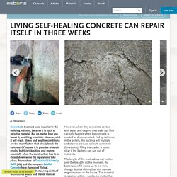 Living self-healing concrete can repair itself in three weeks