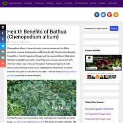 Health Benefits of Bathua (Chenopodium album)