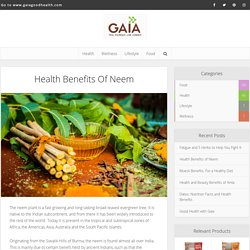 Health Benefits of Neem - Blog