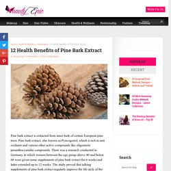 12 Health Benefits of Pine Bark Extract