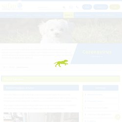 Low-Cost Dental Care for Dog in League City, TX - Safarivet