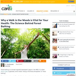Why A Walk In The Woods Is Vital For Your Health: The Science Behind Forest Bathing