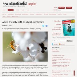 A bee-friendly path to a healthier future