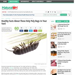 Healthy Facts About Those Roly Poly Bugs In Your Yard