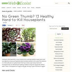 No Green Thumb? 13 Healthy Hard-to-Kill Houseplants