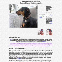 Heart Failure In Your Dog - Cardiomyopathy