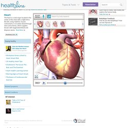 Heart Pictures, Diagram & Anatomy