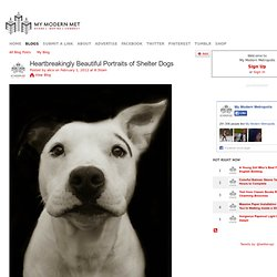 Heartbreakingly Beautiful Portraits of Shelter Dogs