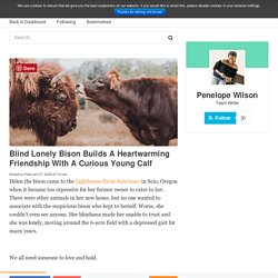 Blind Lonely Bison Builds A Heartwarming Friendship With A Curious Young Calf
