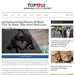 25 Heartwarming Photos Of Black Cats To Show They Aren't Bad Luck