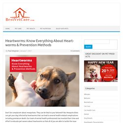Heartworms: Know Everything About Heartworms & Prevention Methods