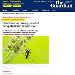 12/1/19: Global heating driving spread of mosquito-borne dengue fever
