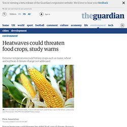 Heatwaves could threaten food crops, study warns