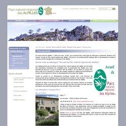 Hébergements / Préparer votre séjour / Découverte et Loisirs - Site du parc naturel des Alpilles