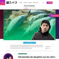 Hécatombe de dauphins sur les côtes françaises